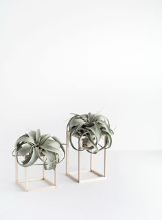 DIY Air Plant Holders