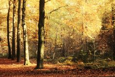 Het bos in de herfst. by Kashia Serzysko www.photobykashia.webnode.nl
