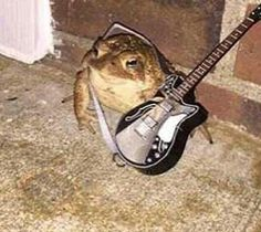 Is this toad the wet sprocket? Sapo Frog, Funny Animals, Cute Animals, Frog Pictures, Cute Frogs, Frog And Toad, Mo S, Cursed Images, Mood Pics