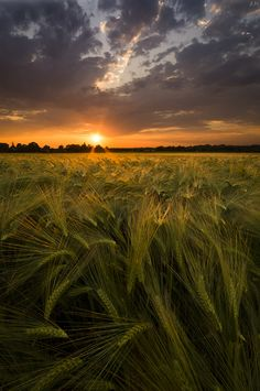 Sunset in the field by Alexandre MAINGUET on 500px