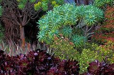 Huntington Desert Garden, California by Allen Rokach Desert Climate, Arizona Gardening, Xeriscaping, Plant Information, Plant Drawing, Garden Photos, Plant Design, Botany, Botanical Gardens