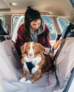Dog Travel, Seat Covers, Amazing Destinations, Hammock, Your Dog, Car Seats, Stylish, Dogs, Fun