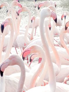 Pink flamingos. #colorstory