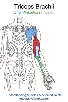 Understanding Trigger Points - Vague pain in the back of the shoulder and srm