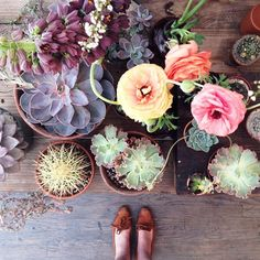 Succulents and shoes