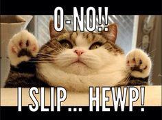 Cute little fat cat!!