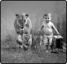 LION FAMILY & LITTLE TARZAN
