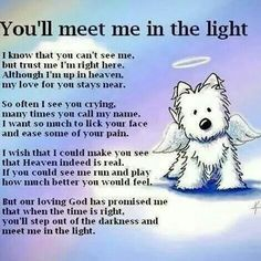 Rest in Peace to our wonderful family pets ~ ♡ Tillie Mae ♡             ♡ Kallie Ann ♡                          ♡ Mollie Ann ♡  You all are terribly missed. My big brother Terry is with you all now. Miss him terribly too!  X0 ♡