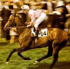 Nonoalco(1971)Nearctic- Seximee By Hasty Road. 4x5 To Sir Gallahad III. 10 Starts 7 Wins   1 Second. $270,972. Won Prix Yacowlef(Fr), Prix Morny(Fr), Prix De La Salamandre(Fr), Prix Jacques Le Marois(Fr), Prix Du Rond Point(Fr) 2000 Guineas (Fr).: