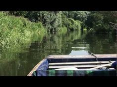 Scudamore's Punting Company Cambridge - Wild Life Punt Tour