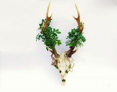 Animal Skull Bonsai Trees Weave Life and Death Together in Darkly Beautiful Art – grape Japan