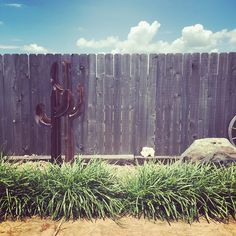 """Relaxing poolside. #summer #cactus #nap"" Photo taken by @cassiebshelton on Instagram, pinned via the InstaPin iOS App! http://www.instapinapp.com (06/12/2015)"