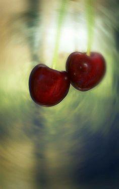 Organic cherry ...photo by:maliheh fadaie