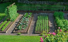 'Half of the Whole' - Half of the eight bed vegetable garden.