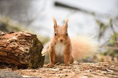 Furry friend: Ellie Lethaby from London took this photograph of a squirrel on Brownsea Island, Dorset