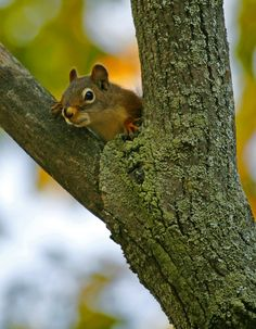 Red squirrel curious by Robert Grove