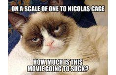 Did y'all know 'Grumpy Cat' aka Tardar Sauce, is a girl? Grumpy Cat Quotes, Grumpy Cat Movie, Gato Grumpy, Funny Grumpy Cat Memes, Funny Cats, Funny Animals, Grumpy Kitty, Funny Memes, Jokes