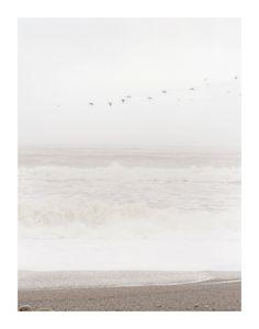 Flight of the Ocean Wall Art Prints by Sharon Rowan   Minted