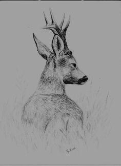 Pencil Art Drawings, Art Drawings Sketches, Animal Drawings, Hunting Tattoos, Deer Drawing, Graphite Art, Deer Pictures, Hunting Art, Drawing Studies
