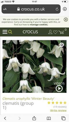Winter Beauty, Clematis, Plant Leaves, Garden, Plants, Garten, Lawn And Garden, Gardens, Plant