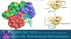 Virology 2015 Lecture #6: RNA directed RNA synthesis