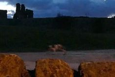 Cryptid Creature, Ghost Animal or is this a video of something more?