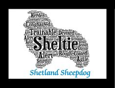 "Traits of the Shetland Sheepdog The Shetland Sheepdog, or ""Sheltie"" as it is commonly called, is essentially a working Collie in miniature. A rough-coated, longhaired working dog, he is alert, intense"
