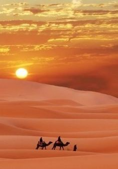 We did this on our honeymoon. Camel riding in the Sahara Desert @ sunrise. An unforgettable experience.
