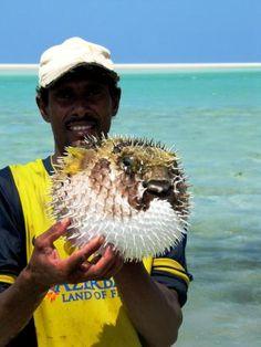 Socotra Island (Aden, Yemen): Top Tips Before You Go - TripAdvisor