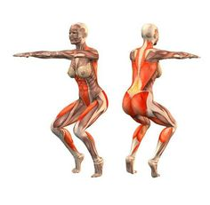 Utthita utkatasana | anatomy yoga | Pinterest | Yoga and Anatomy