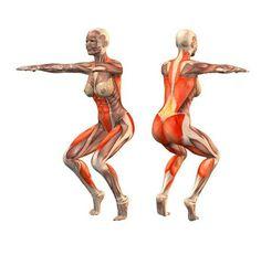Utthita utkatasana   anatomy yoga   Pinterest   Yoga and Anatomy