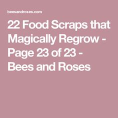 22 Food Scraps that Magically Regrow - Page 23 of 23 - Bees and Roses