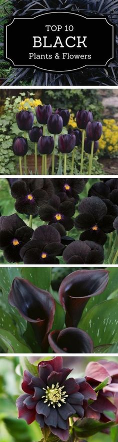 Take a look at these 10 black flowers and plants we have chosen as most suitable for adding a dark touch to your garden and choose your favorites. #flowergardening
