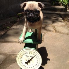 Let's see...I weigh....