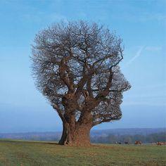 Storm-Thorgerson-Tree-of-Half-Life72dpi Photographer Storm Thorgerson