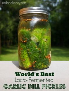 World's Best Lacto-Fermented Garlic Dill Pickles recipe. So I took the principles of fermented dill pickles from Nourishing Traditions and combined them with the spices of my mom's famous recipe. And voila! A perfect fermented dill pickle was born! Garlic Dill Pickles, Pickled Garlic, Probiotic Foods, Fermented Foods, Lacto Fermented Pickles, Fermentation Recipes, Canning Recipes, Kefir, Nourishing Traditions