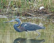 Waukegan harbor - excellent four season bird watching.  It can be a isolated in winter, so go with a buddy.