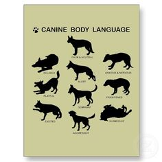 "One of the most useful bits of knowledge to have when dealing with dogs is how to read them upon first glance. They'll tell you just what's going on. (""Canine Body Language - tips for safely approaching dogs"")"
