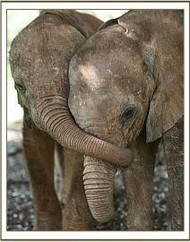 Love Elephants! Strong, loving, and quiet. Just don't tick one off. :)