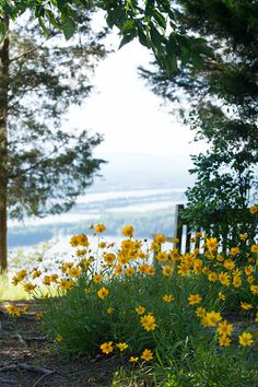 Wildflowers and a perfectly placed bench take in the view from the Bluff.