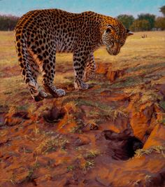 Originals - John Banovich Wildlife Paintings, Wildlife Art, Animal Paintings, Big Cats Art, Cat Art, Dallas Safari Club, John Banovich, Cap Drawing, Animal Sketches