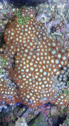 Coral Aquarium, City Photo