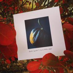 Happy First Day of Autumn! #pottingshedcreations #fruitandveg #squash #autumn #greetings #stationery #madeinusa #notes