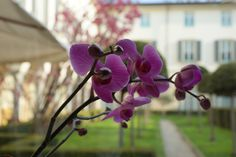 The orchid and the courtyard...