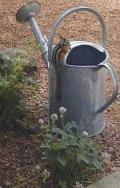 love this very vintage watering can...