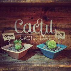 Cactil Cactus Land  Marca en madera  Bogotá, Colombia