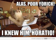 funny sloth pictures - Google Search