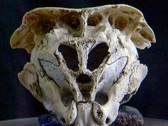 Mysterious Skull Of Unidentified Origin - MessageToEagle.com