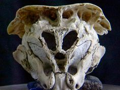 This skull was discovered in the city of Plovdiv located within easy reach of the Rhodope Mountains, located in the southern part of the Balkan Peninsula, in May 2001.  Read more: http://www.messagetoeagle.com/rodopiskull.php#ixzz30D4ltZ2j
