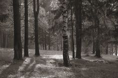 Forest Daylight - Tapetit / tapetti - Photowall